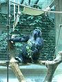 Suisse zoo (25).jpg