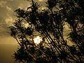 Sunrise in Tehtan Highway at 2011 Spring - panoramio (3).jpg