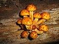 Super Mario Brothers mushrooms ( 10 UP - extra lives) (1482485943).jpg