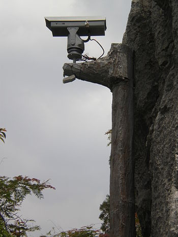 A surveillance camera in the Major Stone Fores...