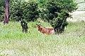 Tarangire 2012 05 27 1951 (7468505142).jpg