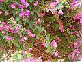 Techo de hojas - panoramio (1).jpg