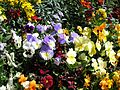 Teignmouth Blooms Again - 12 - Flickr - Sir Hectimere.jpg