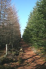 Teindland Forest This track and fence mark the boundary between two different forest blocks. The 1982 1:50,000 map shows forest on the right, but not on the left. This is looking up towards 'Findlay's Seat', where three parishes and five forest tracks meet.