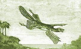"""Ілюстрація Уільяма Бібі (William Beebe) гіпотетичного """"Tetrapteryx"""" з чотирма крилами"""