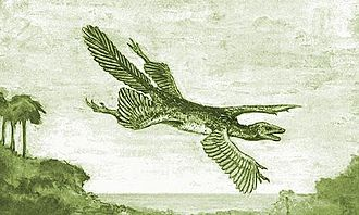 "Microraptor - William Beebe's hypothetical ""Tetrapteryx"" with four wings, 1915"