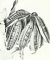 The Australian flora in applied art (1915) (14597859020).jpg