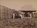 The National Archives UK - CO 1069-453-05 - Customs Outpost on the present Boundary (detail).jpg