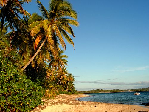 Coconut palms line the beaches of Fiji The Point (Fiji).jpg