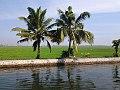 The Rice Field in Kuttanadu Kerala India.jpg