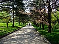 The TNU Botanical Garden in Simferopol, Crimea, Ukraine 03.JPG