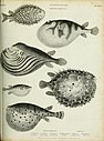 The cyclopaedia; or, Universal dictionary of arts, sciences, and literature. Plates (1820) (20634877179).jpg