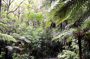 Waipoua Forest - The jungle inside Waipoua Forest.