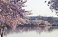 Tidal Basin toward the White House - 2013-04-09 (8634835455).jpg