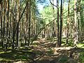 Tomsky District, Tomsk Oblast, Russia - panoramio (72).jpg