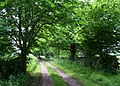 Tree-lined track to Brindley Cottage - geograph.org.uk - 850544.jpg