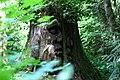 Tree Carving Sculpture in Stanley Park (14290316747).jpg