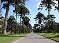 Tree lined Drive at Bicton College - geograph.org.uk - 364399.jpg