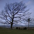 Tree overlooking the Dyfi valley - geograph.org.uk - 677030.jpg