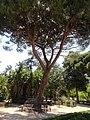 Trees, Palermo, Sicily, Italy (9458445266).jpg