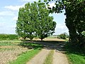 Trees At Footpath Junction - geograph.org.uk - 1290315.jpg