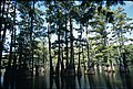 Trees at Big Thicket National Preserve (2).jpg