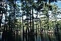 Trees at Big Thicket National Preserve (2).jpg
