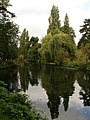 Trees reflected in the lake - geograph.org.uk - 1592418.jpg