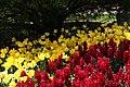 Tulipa Yokohama 1zz.jpg