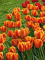Tulips Botanic Garden - Cluj Napoca (2439474172).jpg