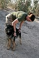 US Navy 071106-M-9152C-027 Petty Officer 2nd Class Kaitlin Abert, with Task Force Military Police, rewards her military working dog with a ball during a training exercise.jpg