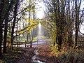 Umberslade Hall driveway - geograph.org.uk - 88629.jpg