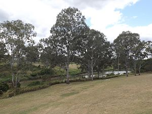 Bremer River (Queensland) - The river at Basin Pocket, 2015