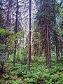 Valdaysky District, Novgorod Oblast, Russia - panoramio (2789).jpg