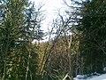 Valmorel 2012 - panoramio (7).jpg