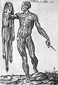 "Valverde de Hamusco ""Anatomie""; flayed skin Wellcome L0002519.jpg"