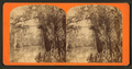 View of trees along the Oklawaha River, Fla, from Robert N. Dennis collection of stereoscopic views.png