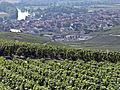 Vigne Pinot noir (Vue sur Cumières) Cl.J.Weber02 (23050642693).jpg