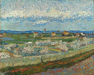 Peach Trees in Blossom