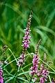 Violett (220752075).jpeg