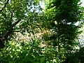 Vue d'ensemble du jardin Albert Kahn 2.JPG