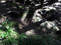 Vylet k Cernemu jezeru Sumava - 9.srpna 2010 144.JPG