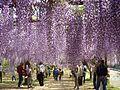 Wake fuji park01.jpg