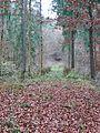 Waldweg - panoramio (7).jpg