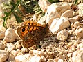 Wall Brown (31878503300).jpg