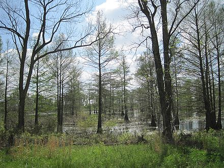 The flooded forested bottomlands of east Arkansas attract wintering waterfowl (Wapanocca National Wildlife Refuge). Wapanocca National Wildlife Refuge Crittenden County AR 052.jpg