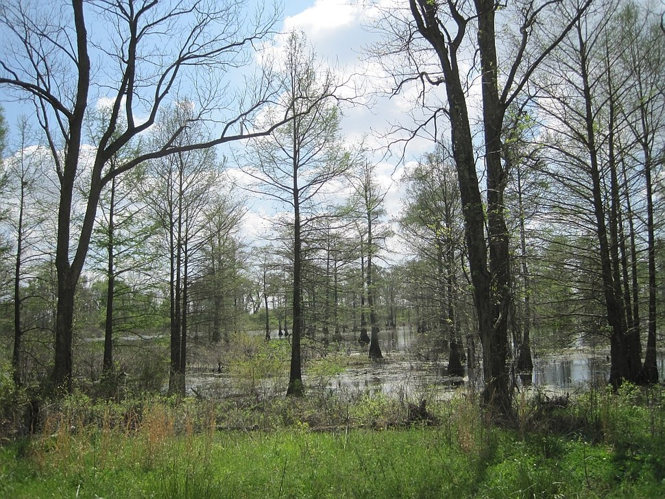 Wapanocca National Wildlife Refuge Crittenden County AR 052