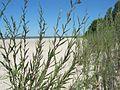 Wasaga Beach ^4 - panoramio (1).jpg
