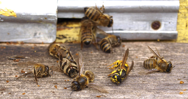 Industrial Farming Is Destroying Our Health and Environment 800px-Wasp_attack