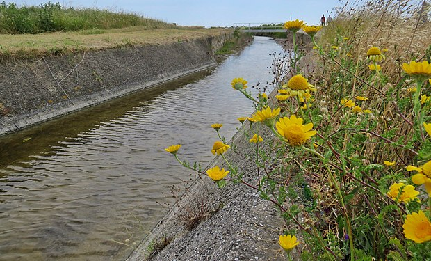 Water collection channel in Vada (Livorno) which flows into the Tyrrhenian Sea.jpg